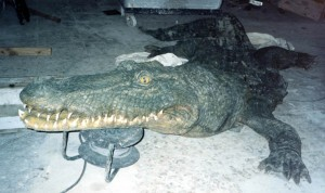 cocodrilo04